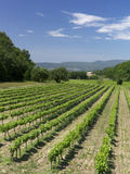 Vineyard, Petit Luberon, Provence, France, Europe Photographic Print by Rob Cousins