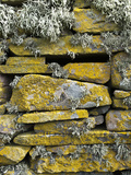 Lichen on Rocks, Broch of Mousa, Mousa Island, Shetland Island, Scotland, United Kingdom, Europe Photographic Print by Andrew Stewart