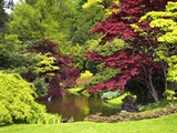 Acer Trees and Pond in Sunshine, Gardens of Villa Melzi, Bellagio, Lake Como, Lombardy, Italy Photographic Print by Peter Barritt
