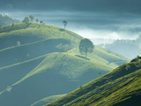Early Morning Mist over Tea Plantations, Near Munnar, Kerala, India, Asia Photographic Print by Stuart Black
