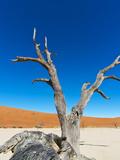 Sossusvlei, Namib Desert, Namib Naukluft Park, Namibia, Africa Photographic Print by Nico Tondini