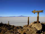 Cactus Arrow on Isla de Los Pescadores, Volcan Tunupa and Salt Flats, Salar de Uyuni, Bolivia Photographic Print by Simon Montgomery