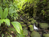 Morne Trois Pitons National Park, UNESCO World Heritage Site, Dominica, West Indies, Caribbean Photographic Print by Sergio Pitamitz