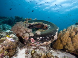 Coral Encrusted Tyre at Nalusuan Marine Sanctuary, Cebu, Philippines, Southeast Asia, Asia Photographic Print by Lisa Collins