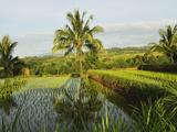 Rice Fields, Senaru, Lombok, Indonesia, Southeast Asia, Asia Photographic Print by Jochen Schlenker