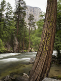 Tree and River with El Capitan, Yosemite Nat'l Park, UNESCO World Heritage Site, California, USA Photographic Print by Antonio Busiello