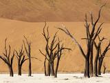 Dead Trees, Deadvlei, Sossusvlei, Namib Naukluft Park, Namib Desert, Namibia, Africa Photographic Print by Sergio Pitamitz