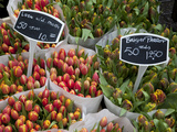 Tulips, Bloemenmarkt, Amsterdam, Holland, Europe Photographic Print by Frank Fell