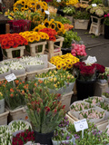 Flower Stall, Bloemenmarkt, Amsterdam, Holland, Europe Photographic Print by Frank Fell