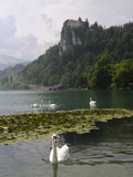 Mute Swans (Cygnus Olor) and Mallard Ducks (Anas Platyrhynchos), Lake Bled, Slovenia, Slovenianan Photographic Print by Nick Upton