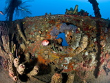 Coral Encrusted Porthole on Lesleen M Wreck, Sunk in 1985 Off Anse Cochon Bay, St Lucia Photographic Print by Lisa Collins