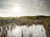 Everglades National Park, UNESCO World Heritage Site, Florida, USA, North America Photographic Print by Angelo Cavalli