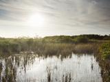 Everglades National Park, UNESCO World Heritage Site, Florida, USA, North America Photographic Print by Angelo Cavalli