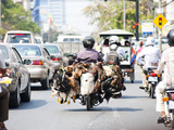 Live Chickens and Ducks Being Taken to Market on a Moped in Phnom Penh, Cambodia, Indochina Photographic Print by Matthew Williams-Ellis