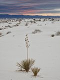 Yucca on the Dunes at Sunrise, White Sands National Monument, New Mexico, USA, North America Photographic Print by James Hager