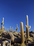 Cacti on Isla de Los Pescadores and the Salt Flats of Salar de Uyuni, Southwest Highlands, Bolivia Photographic Print by Simon Montgomery