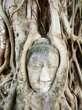 Stone Buddha Head in Fig Tree Roots, Wat Mahathat, Ayutthaya, UNESCO World Heritage Site, Thailand Photographic Print by Matthew Williams-Ellis