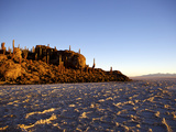 Cacti on Isla de Los Pescadores and Salt Flats, Salar de Uyuni, Southwest Highlands, Bolivia Photographic Print by Simon Montgomery