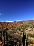 Cacti in Canon del Inca, Tupiza, Southwestern Bolivia, South America Photographic Print by Simon Montgomery