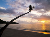 Overhanging Palm Tree at Nippah Beach at Sunset, Lombok Island, Indonesia, Southeast Asia Photographic Print by Matthew Williams-Ellis