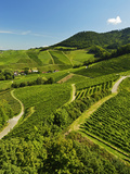 Vineyards, Ortenberg, Ortenau, Baden-Wurttemberg, Germany, Europe Photographic Print by Jochen Schlenker