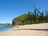Wind Shaped Pine Trees in Bay Des Tortues, Grand Terre, New Caledonia, Melanesia, South Pacific Photographic Print by Michael Runkel