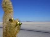 Cacti on Isla de Los Pescadores and Salt Flats, Salar de Uyuni, Southwest Highlands, Bolivia Photographic Print by Simon Montgomery