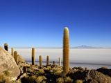 Cacti on Isla de Los Pescadores, Mount Tunupa and Salt Flats Salar de Uyuni, Bolivia Photographic Print by Simon Montgomery
