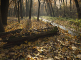 Autumn Leaves in Forest Along Cervenomlynsky Creek, Village of Miskovice, Prague, Czech Republic Photographic Print by Richard Nebesky