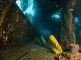 Coral Growth Inside Wreck of Lesleen M Freighter, Sunk in 1985 in Anse Cochon Bay, St Lucia Photographic Print by Lisa Collins
