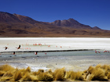 Flamingos on Laguna Canapa, Southwest Highlands, Bolivia, South America Photographic Print by Simon Montgomery