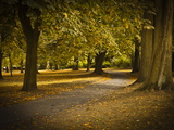 Autumn Path in Regents Park, London, England, United Kingdom, Europe Photographic Print by Ian Egner