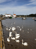 Swans and Ducks on the River Deben at Woodbridge Riverside, Woodbridge, Suffolk, England, UK Photographic Print by Mark Sunderland