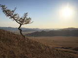A Lone Tree on a Mongolian Hill Side, Mongolia, Central Asia, Asia Photographic Print by Stuart Keasley