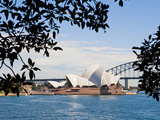 Sydney Opera House, UNESCO World Heritage Site, from Sydney Botanic Gardens, Sydney, Australia Photographic Print by Matthew Williams-Ellis