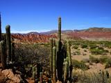 Cacti in Canon del Inca, Tupiza Chichas Range, Andes, Southwestern Bolivia, South America Photographic Print by Simon Montgomery