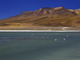 Flamingos on Laguna Canapa, South Lipez, Southwest Highlands, Bolivia, South America Photographic Print by Simon Montgomery
