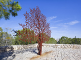 Yad Vashem Holocaust Memorial, Partisans Panorama Memorial Tree, Mount Herzl, Jerusalem, Israel Photographic Print by Gavin Hellier