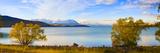 Panorama of Autumn Trees at Lake Tekapo, Canterbury, Southern Lakes, South Island, New Zealand Fotografisk trykk av Matthew Williams-Ellis