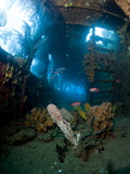 Coral Growth Inside Wreck of Lesleen M Freighter, Sunk in 1985 in Anse Cochon Bay, St Lucia Photographie par Lisa Collins