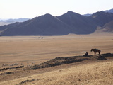 A Mongolian Herdsman Watching over His Animals, Mongolia, Central Asia, Asia Photographic Print by Stuart Keasley