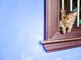 Cat at Cheong Fatt Tze Mansion, Georgetown, Penang, Malaysia, Southeast Asia, Asia Photographic Print by Matthew Williams-Ellis