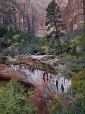 Evergreens, Red Maples, and Red Rock on the Emerald Pools Trail, Zion National Park, Utah, USA Photographic Print by James Hager