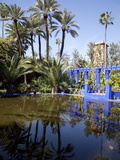 Majorelle Gardens, Marrakesh, Morocco, North Africa, Africa Fotodruck von Frank Fell