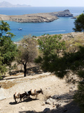 Two Donkeys in the St. Paul Bay, Lindos, Rhodes, Dodecanese, Greek Islands, Greece, Europe Lámina fotográfica por Oliviero Olivieri