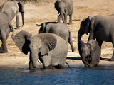 Elephants Drinking, Namibia, Africa Photographic Print by Kim Walker