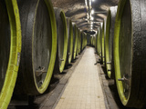 Wooden Wine Barrels, Rosa Coeli Wine Cellar, Dolni Kounice, Brnensko, Czech Republic, Europe Photographic Print by Richard Nebesky