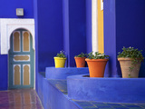 Majorelle Gardens, Marrakesh, Morocco, North Africa, Africa Fotografie-Druck von Frank Fell