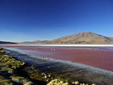 Flamingos on Laguna Colorada (Red Lagoon), Eduardo Avaroa Andean Fauna Nat'l Reserve, Bolivia Photographic Print by Simon Montgomery