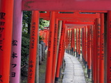Torii at the Nezu-Jinja Shrine, Tokyo, Japan, Asia Photographic Print by Walter Rawlings